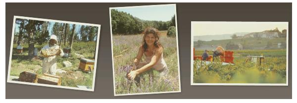 produits bio producteurs biotentik montpellier livraison