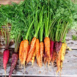 carottes bio 3 couleurs